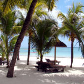 Palm trees on beach with beach chairs