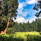 Sequoia2019