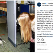 penguins walking through security TSA Instagram post