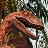 A view of a ferocious raptor's head from the Jurassic Park ride at Univesal Studios Hollywood
