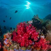 Raja Ampat Reef 2