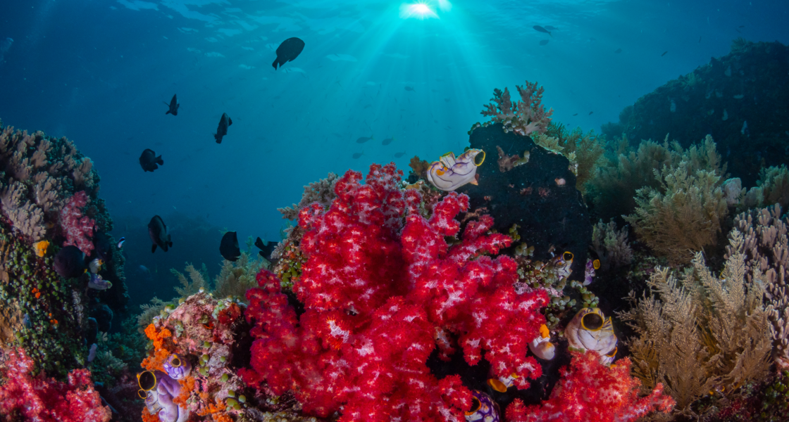 ​The 10 Most Beautiful Coral Reefs in the World