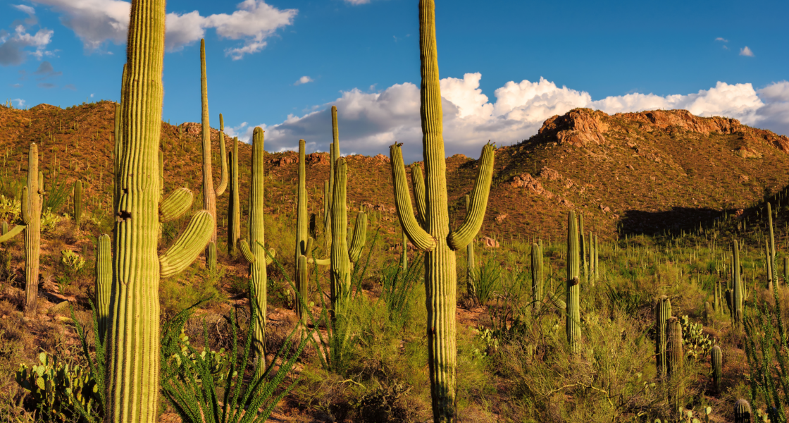 Why Tucson, Arizona, Is Your Next Great Outdoor Adventure