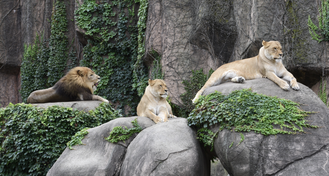 The 10 Best Zoos in the US