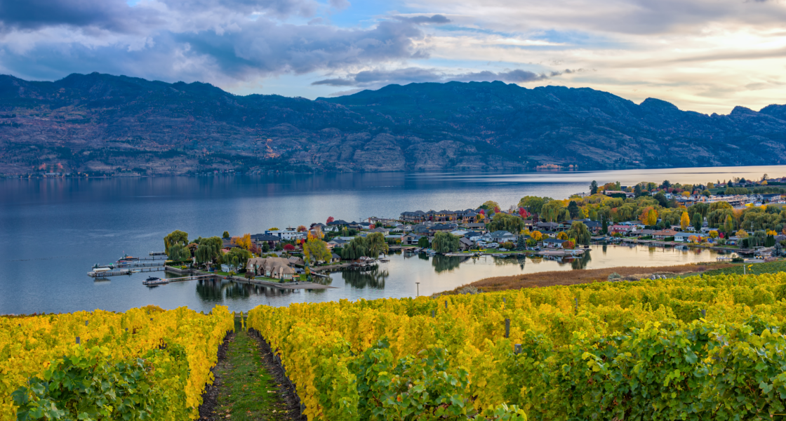 Where to Travel for the Best Canadian Wine