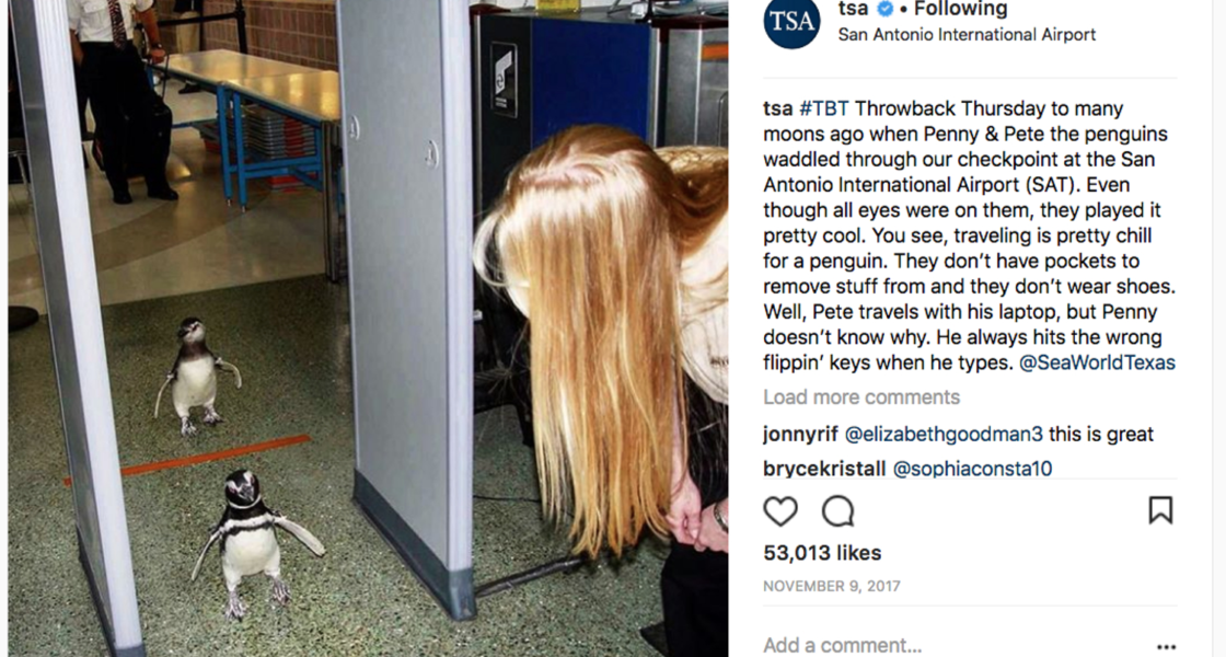 The TSA's Instagram Account Will Make Your Day (Really!)