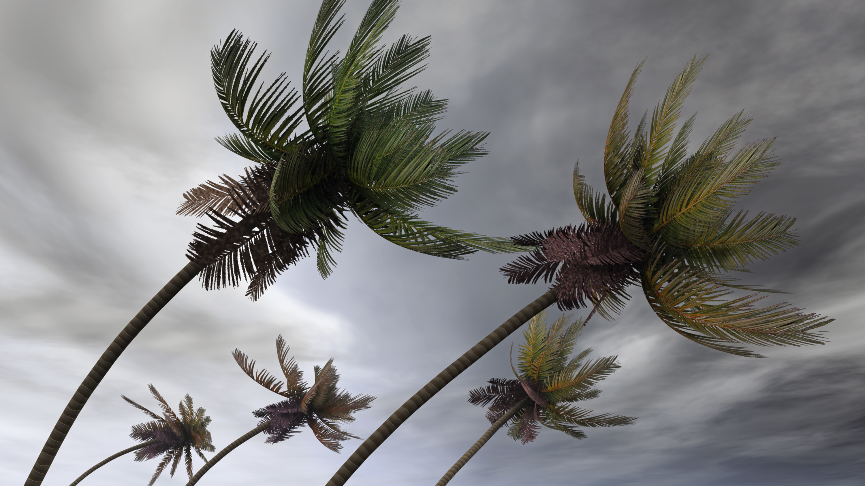 Palm trees in hurricane