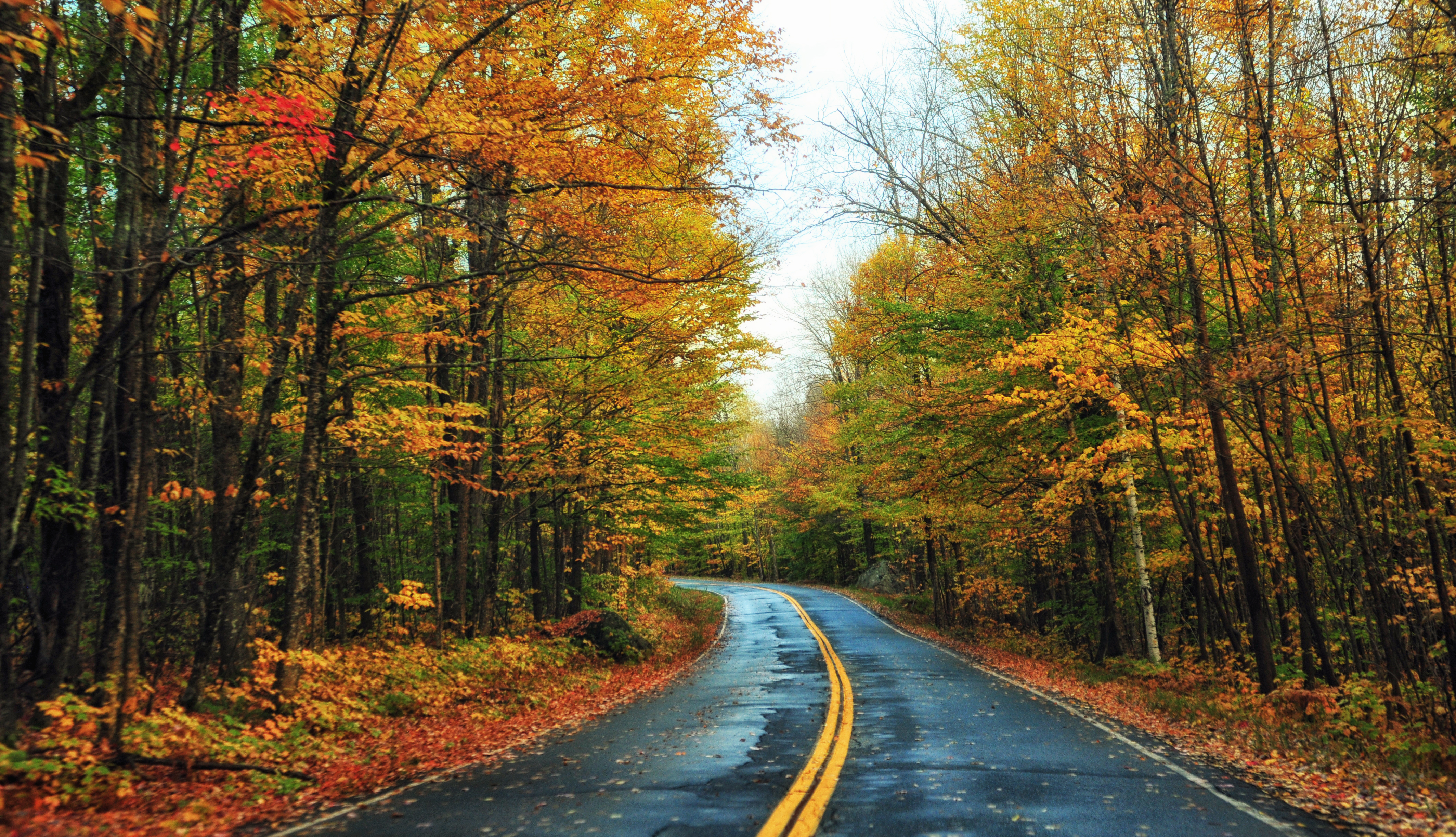 Autumn-in-Groton-Vermont.jpg?mtime=20200115144000#asset:107707