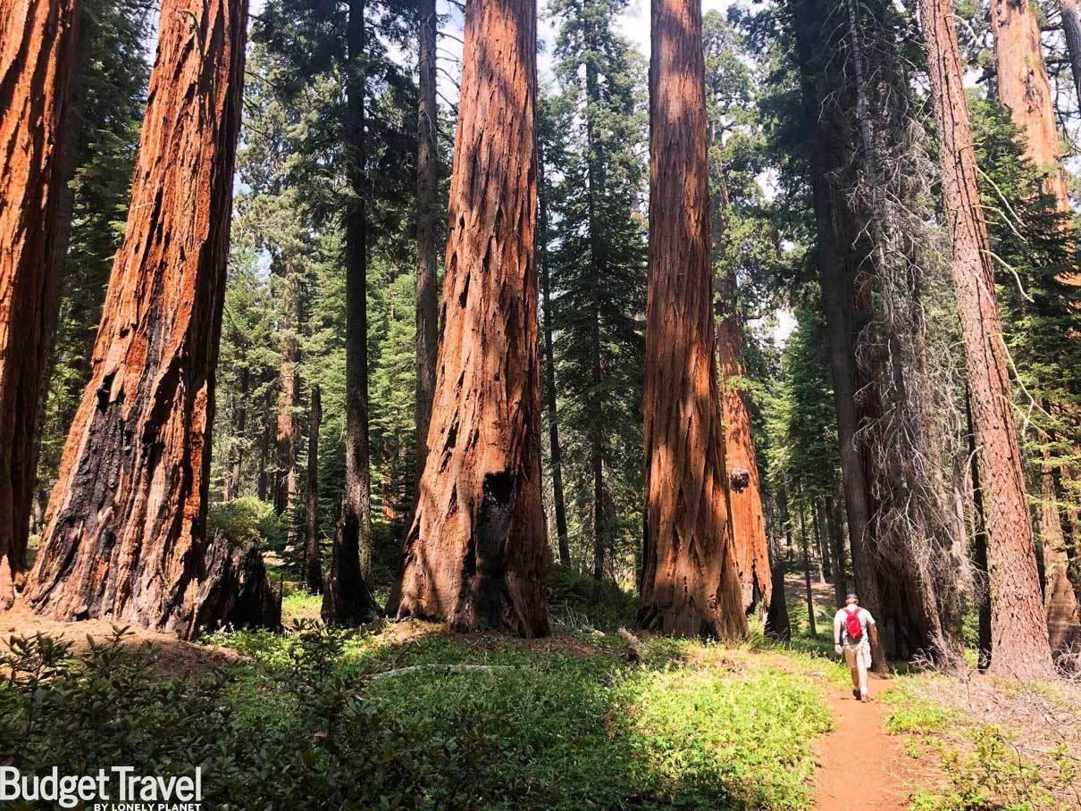 Sequoia Zoom Background