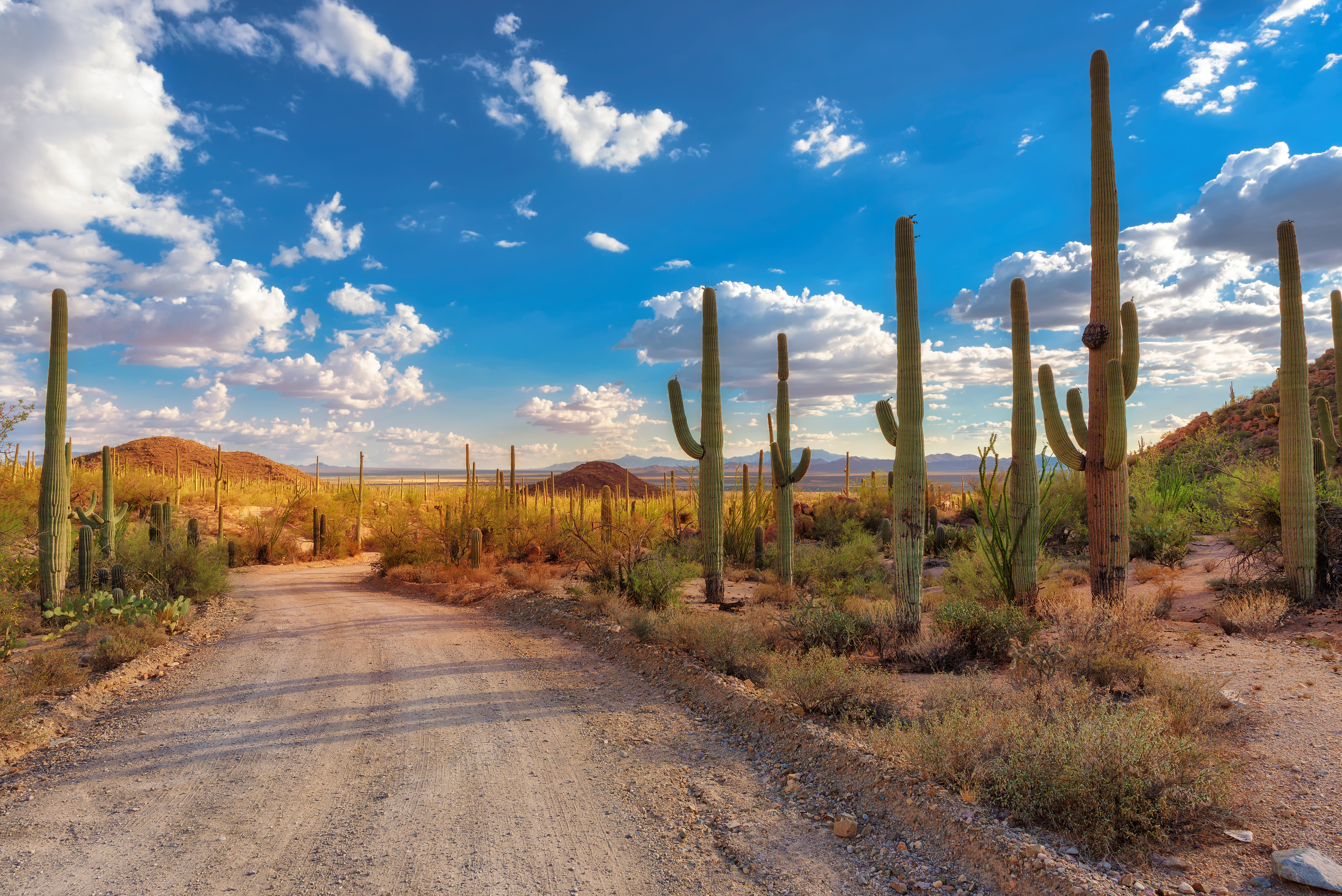 Tall-cacti-alongside-a-dirt-road.jpg?mtime=20200122163520#asset:107754