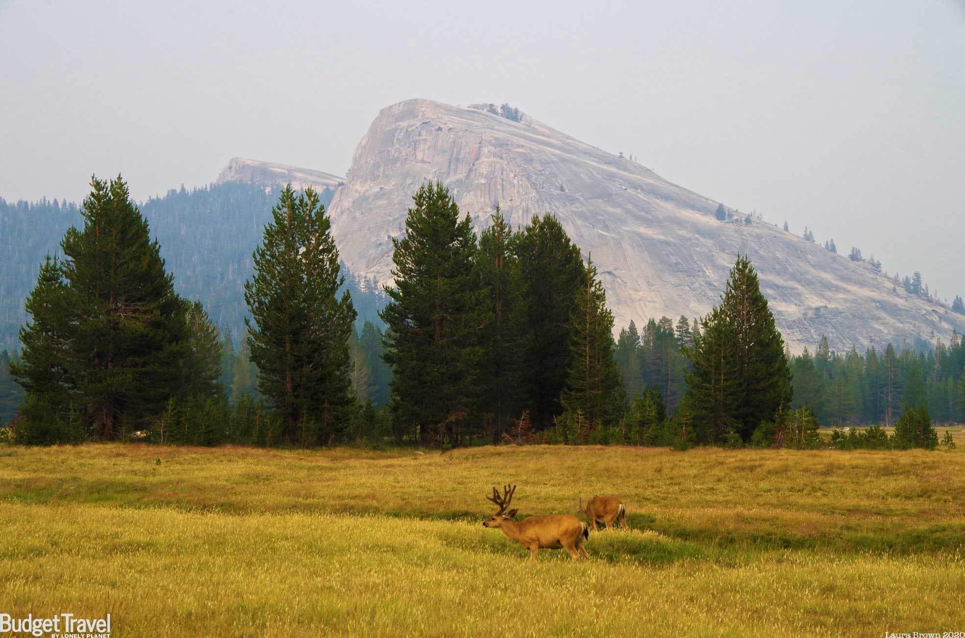 Yosemite Zoom Background