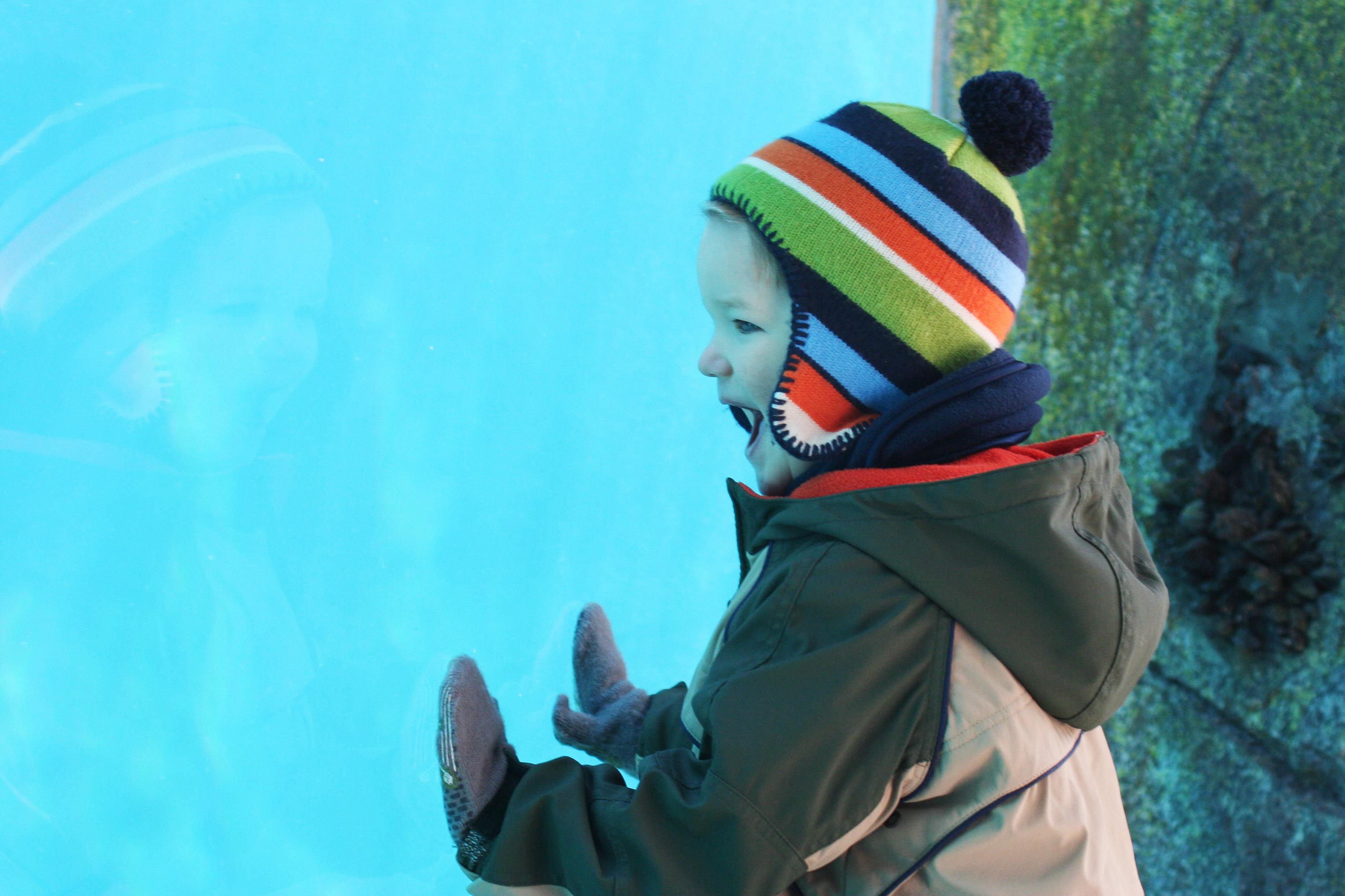 child-enjoying-an-exhibit-at-an-aquarium.jpg?mtime=20200124121724#asset:107774