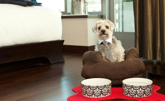 Hotel Palomar dog